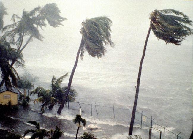 сон ураган за вікном