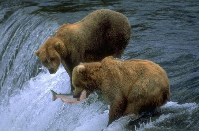 взаємодія видів в екосистемах