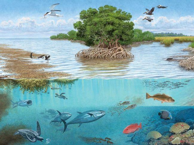 різноманітність видів розгалужені ланцюга харчування в екосистемі є